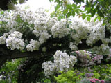 Rambling Rector_1912